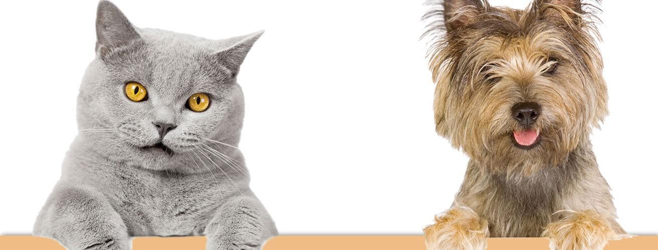 drapak dla kota 3